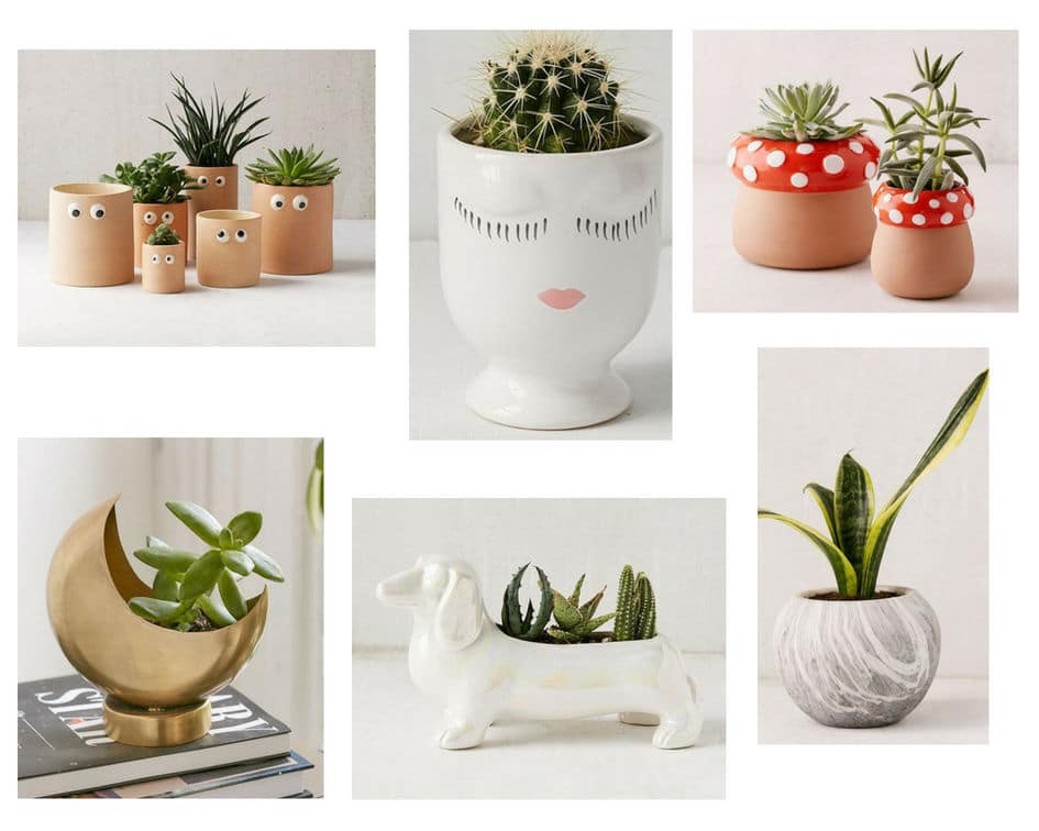 Cute dorm planters in various shapes and price points
