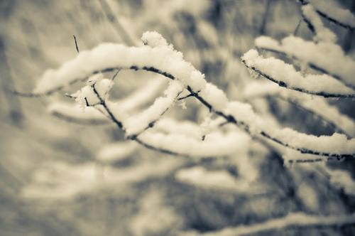 Winter weather - snow on trees