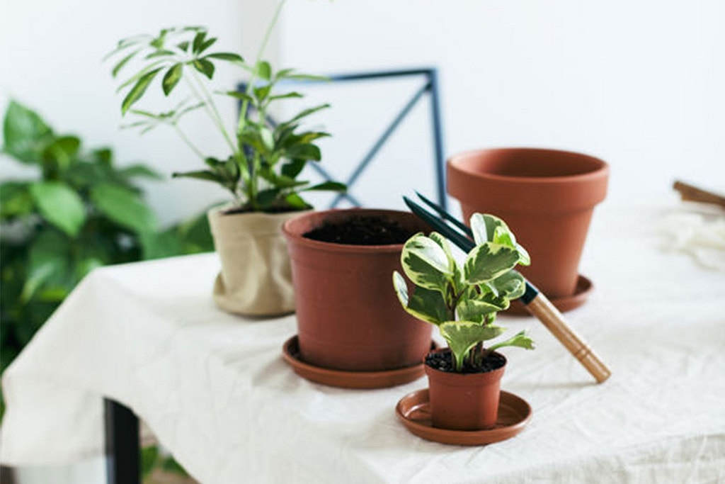 10 Indoor Plants That Will Thrive In Small Spaces College Fashion