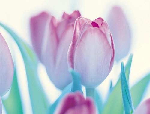 Spring Clean flower header