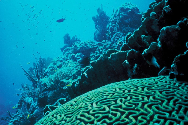 An image of a coral reef