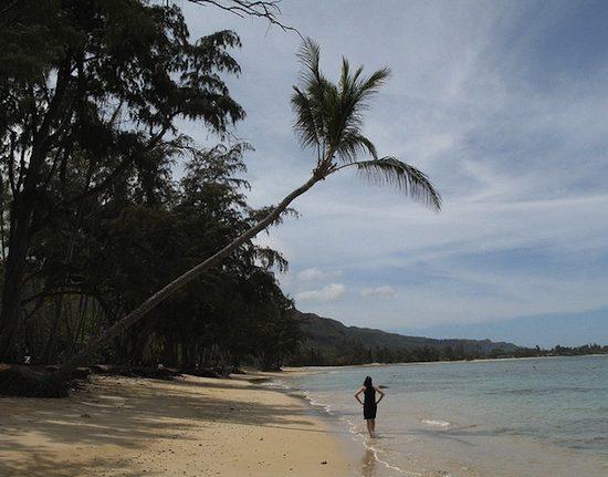 Ask cf tropical vacation header