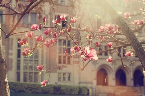 Flower Branch and College