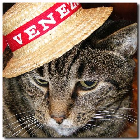 cat-souvenir