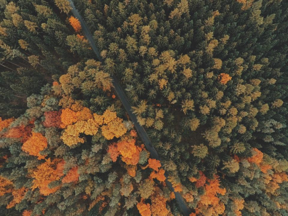 Overhead shot of orange and green trees in a forest