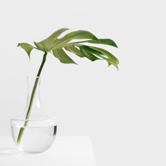 Plant in a clean room