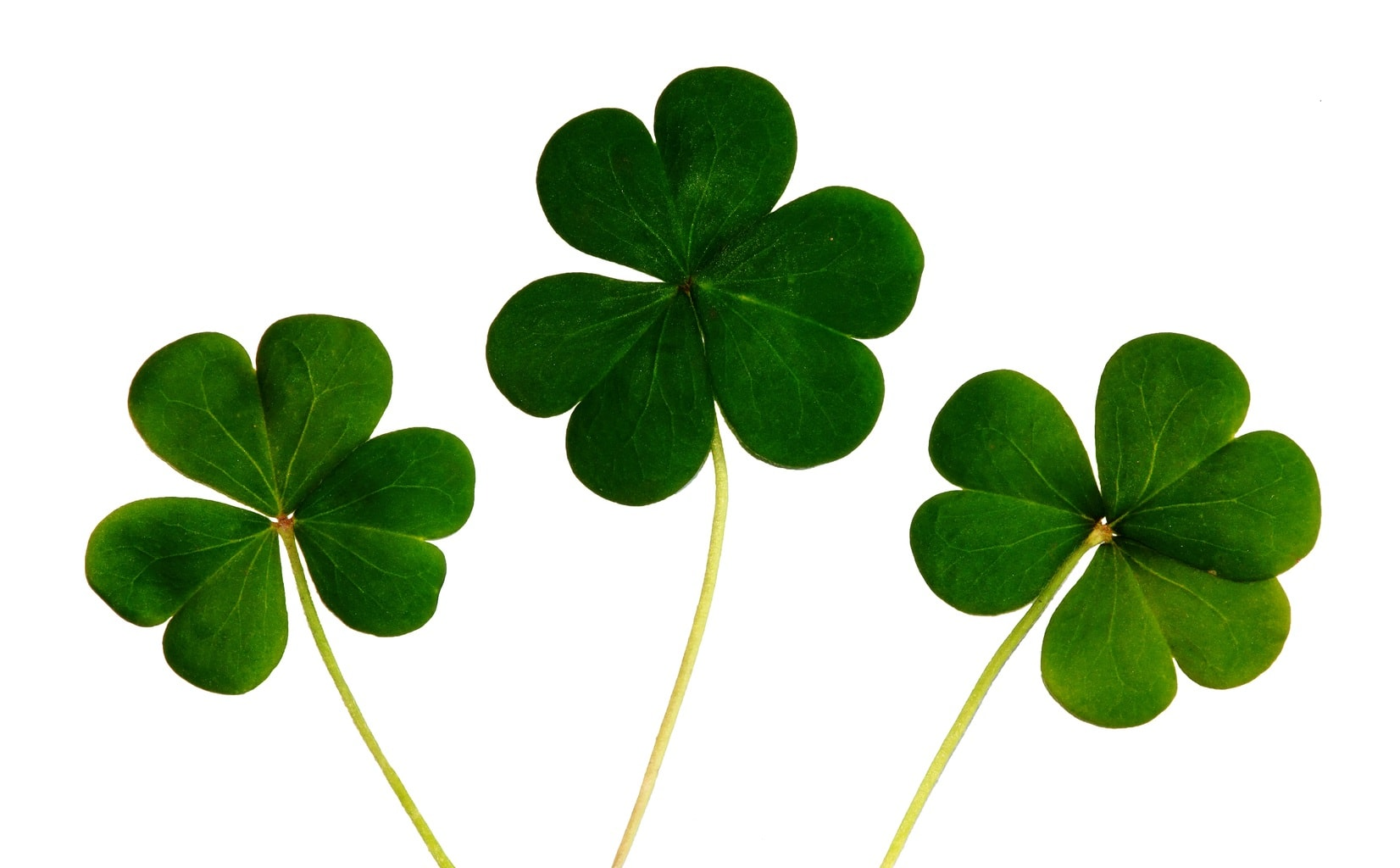 Clovers for st patrick's day - cute st patrick's day outfits