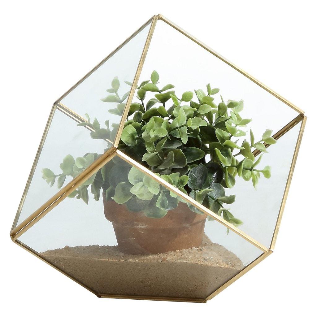 Glass Cube Terranium