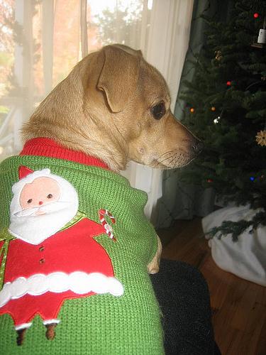 Cute dog rocking a holiday sweater
