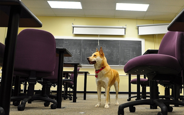 dog in classroom