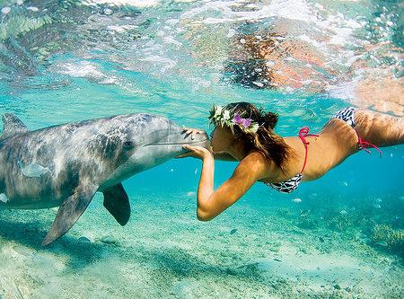 DolphinSpringBreak