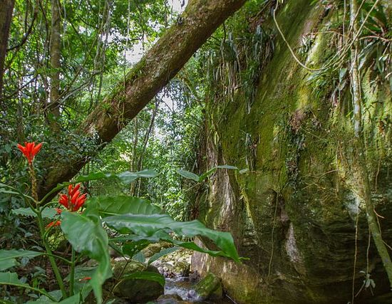 A picture of rain forest epiphytes