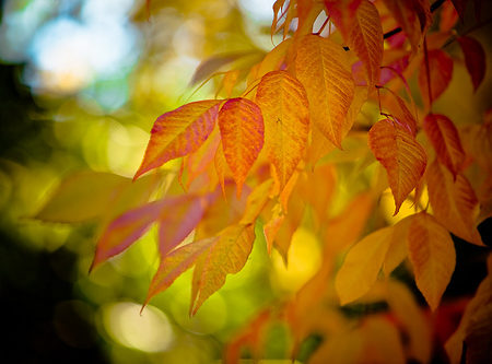 Fall-Leaves-Header