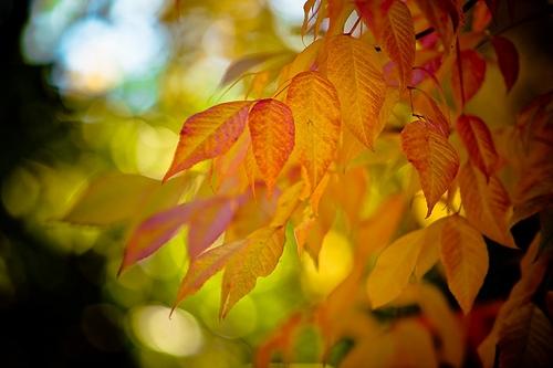 Fall-Leaves-Header