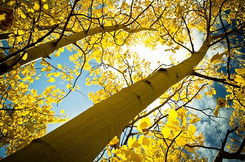 Fall-Trees-Header