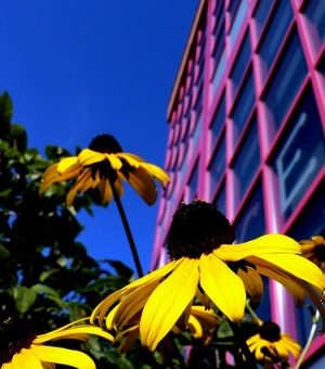 Flowers outside a dorm