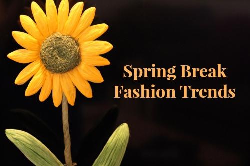 Header-Spring-Break-Sunflower