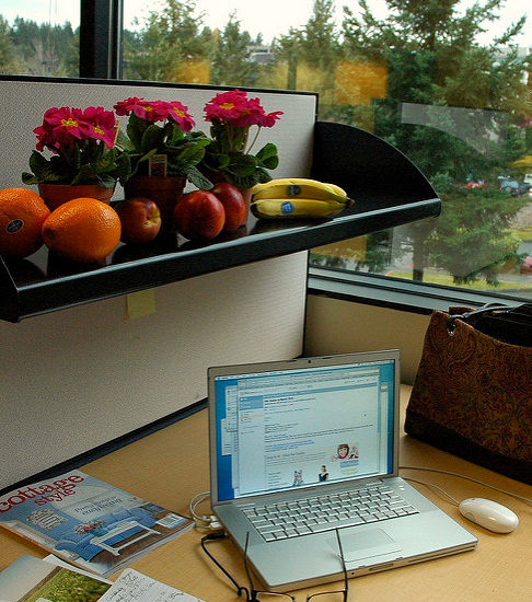 fruit laptop and scenery