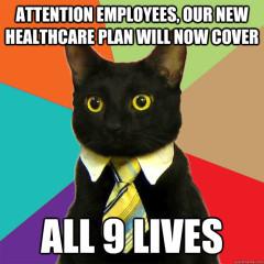healthcare cat