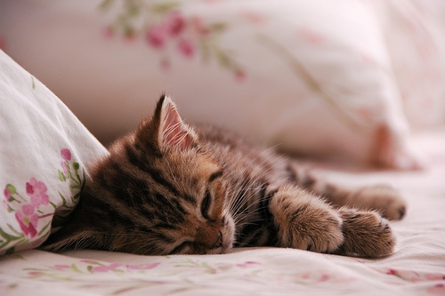 Kittynap