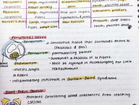 Medical school notes