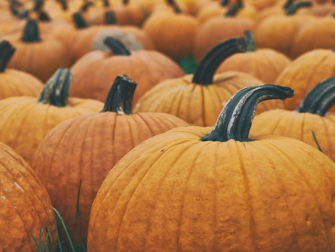 picture-inspired-fashion-pumpkins