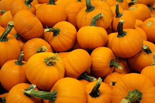 Pumpkins-Header