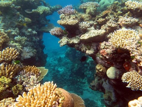 Quiz-World Wonders-Great Barrier Reef-Photo