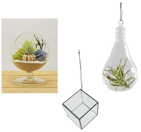 Air plant hanging terrariums