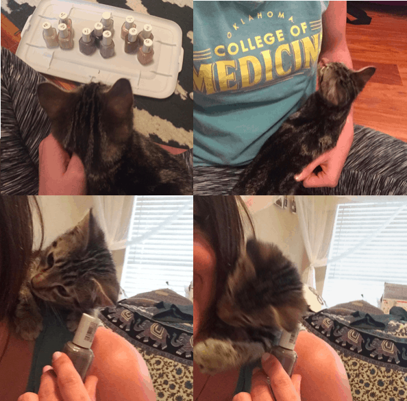 Kitten making painting nails difficult