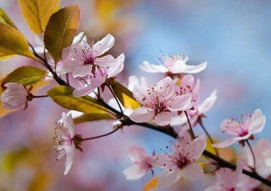 Sping blossoms