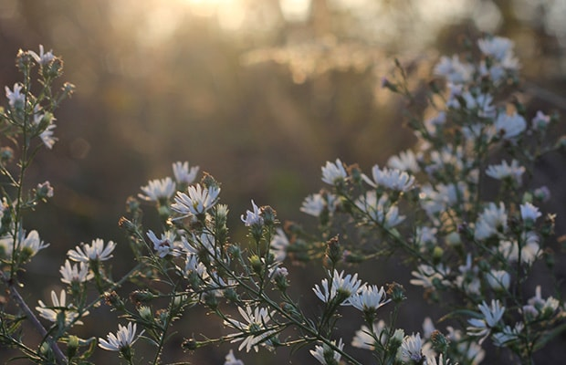 Spring flowers at dawn