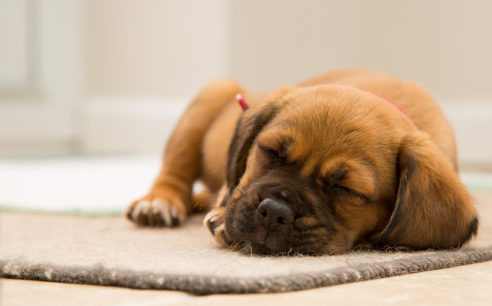 puppy-for-easing-stress