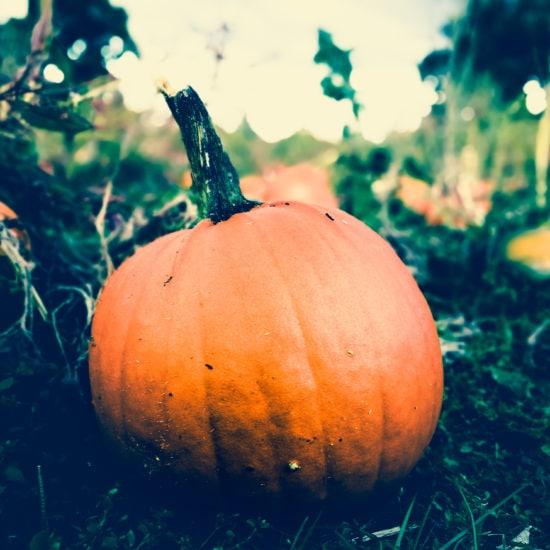 fall_pumpkin
