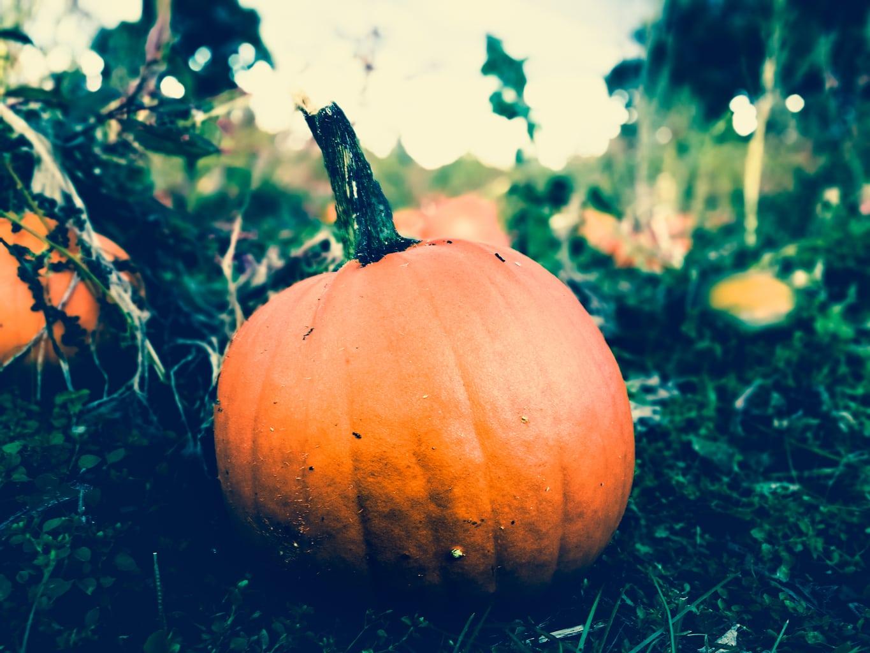 Fall movies - fall pumpkin
