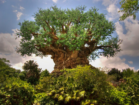 Walt Disney World's Animal Kingdom - Tree of Life