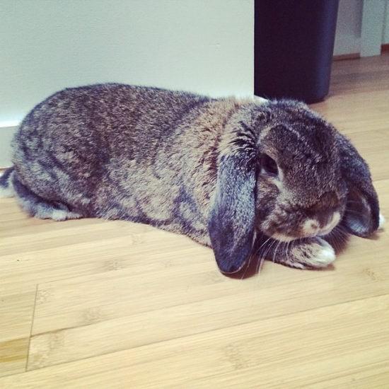 bun doing yoga