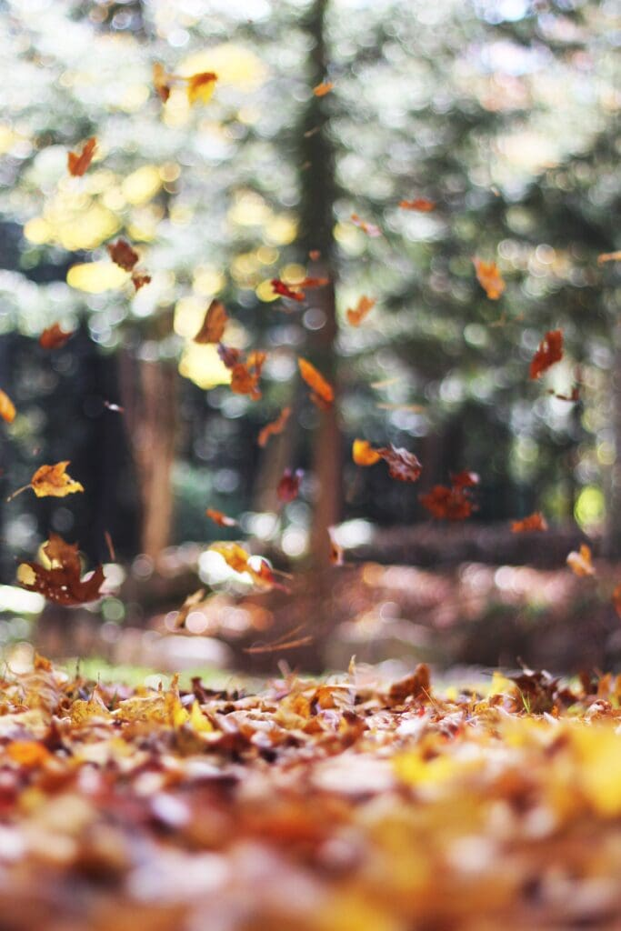 Fall bucket list - crunch in the leaves