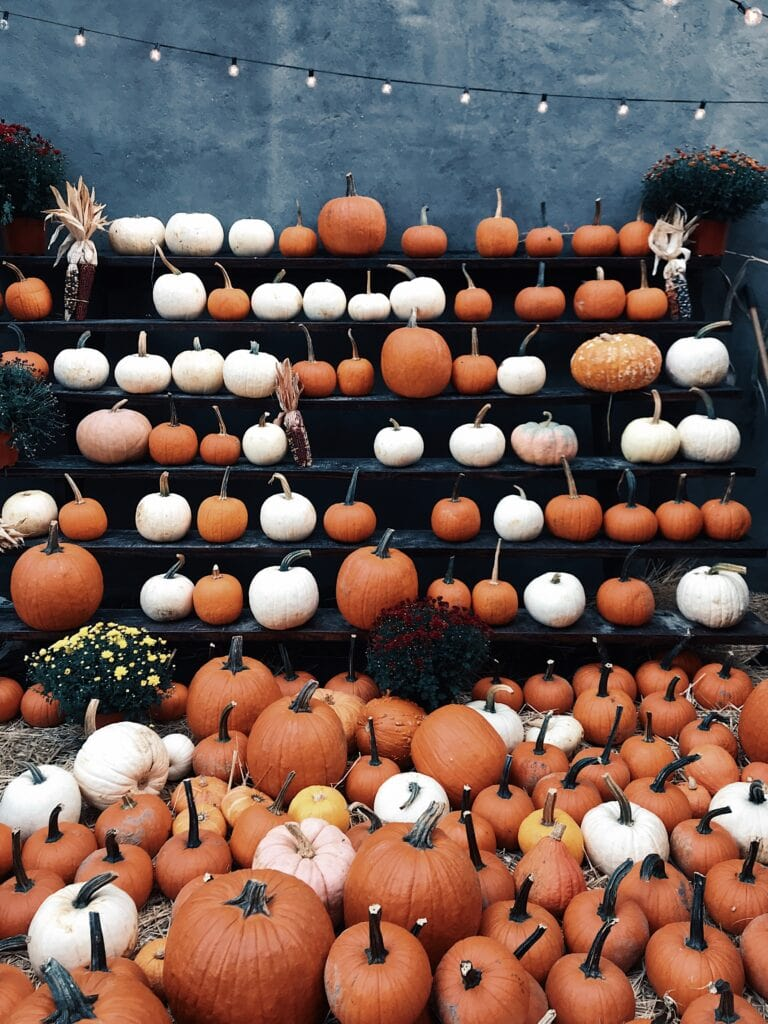 Fall bucket list - visit a pumpkin patch. Picture of a pumpkin stand with orange and white pumpkins