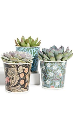 Best gifts for aquarius - potted plants