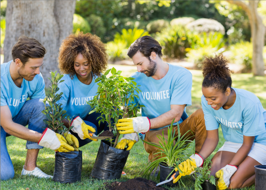 People planting trees while wearing volunteer shirts - things to do over winter break